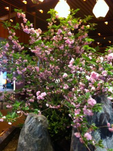 オークラの八重桜