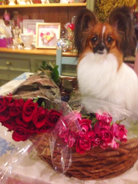 赤い薔薇とココ王子